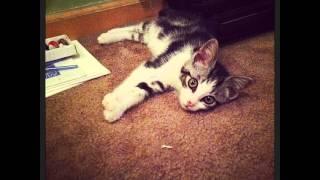 Muhammad Catli 👊#johnnyfuzzball #polydactyl #cat #cats #kittenmittens #instacat #catsofinstagram