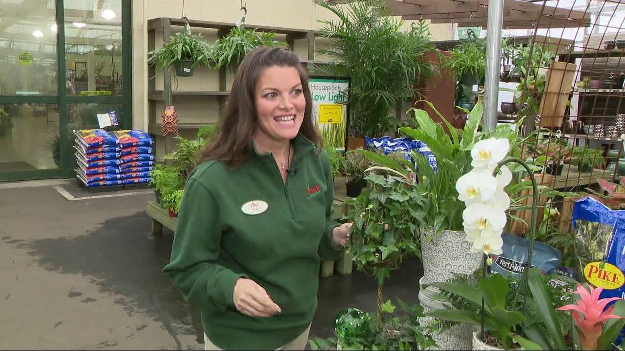 Pike Nursery houseplants on house plant room, house plant watering system, house plant houseplants, house plant care information,