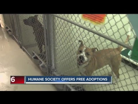 Indy Humane Society offers free adoptions