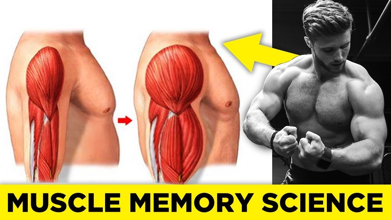 How Muscle Memory Works & How To Use It To Build Muscle (Science Explained)