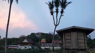 """มะพร้าวแปลกที่เดียวในโลก""""1เดียวในไทยต้น3แฉก""""มันอยู่ข้างวัดโคกเจริญ[เห็นทุกราย]@วัชรกร สร้อยจิตร"""
