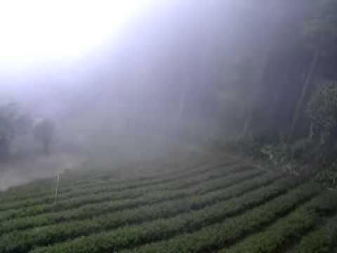 Как чай встречается с облаками Син Чжу. Формоза-Чай