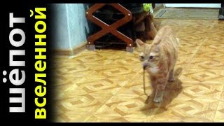 Кот   собака