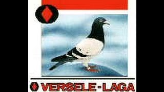 Kingstown Pet Supplies - Pigeon Products