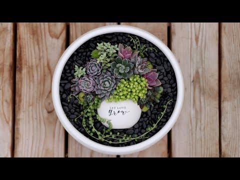 Pot in Pot Succulent Arrangement - Extended Cut