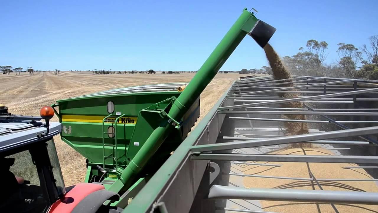 NEW Grain King Field Bin/ Mother Bin