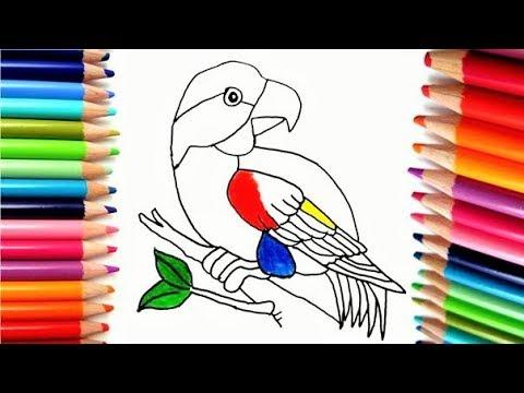 Dibuja y Colorea Loro de Arco Iris - Dibujos Para Niños - Aprende ...