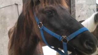 SKH NLP - Konie