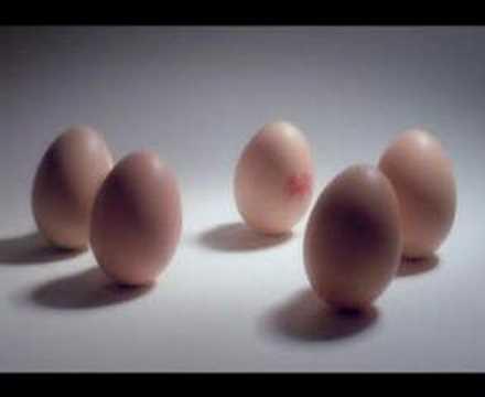 Lion Eggs - Sense Of Humour