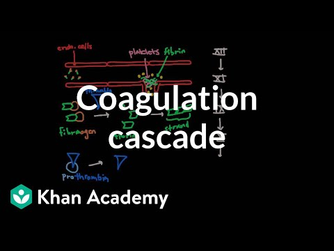 Coagulation cascade | Human anatomy and physiology | Health & Medicine | Khan Academy