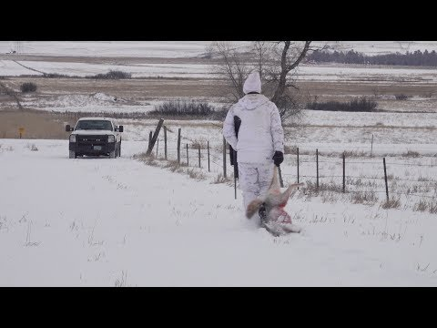 COYOTE HUNTING | Morning Hunt In ND
