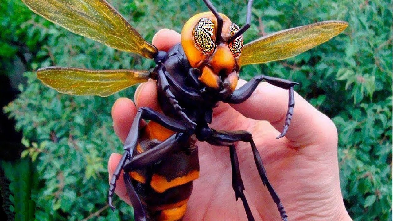 Download 07 Most Dangerous Insects in the World In Hindi/Urdu   Most Dangerous Bugs in the World .