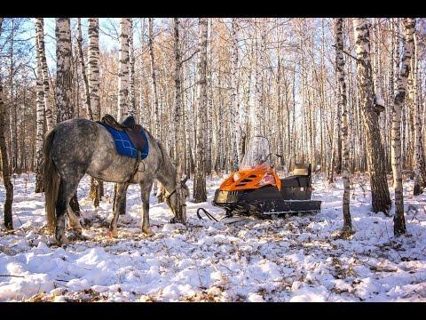 Охота на копытных в Воронежской области