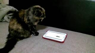 Фильмы для кошек (Релакс для Муси) 2