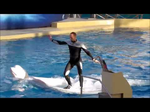 Rixos World - The Land Of Legends Theme Park 5* (Dolphin show)