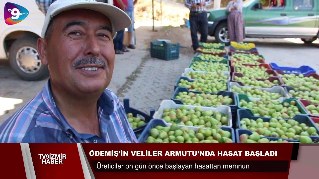 Ödemiş'in Veliler Armut'unda hasat devam ediyor