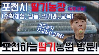 [4K]딸기수경재배 농장 방문 / 경기도딸기체험 / 설…