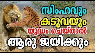 Lion Vs Tiger | Who will win | Lion Vs T...