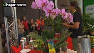 Cuidados de la orquídea: el riego y la poda