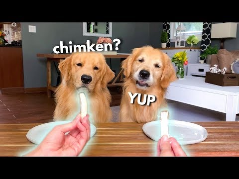 Dog Reviews Food With Grandpa - Part 2 | Tucker Taste Test 14