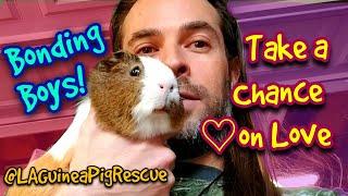 Guines Pig Boy Bonding | Taking a Chance on Love