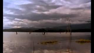 Fluss Monster Die Killerfische im Amazon...