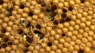 За пчелите и хората - Ден 6