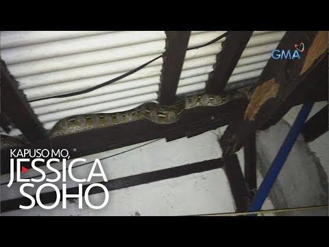 Kapuso Mo, Jessica Soho: Malaking sawa, natagpuan sa kisame ng isang bahay!