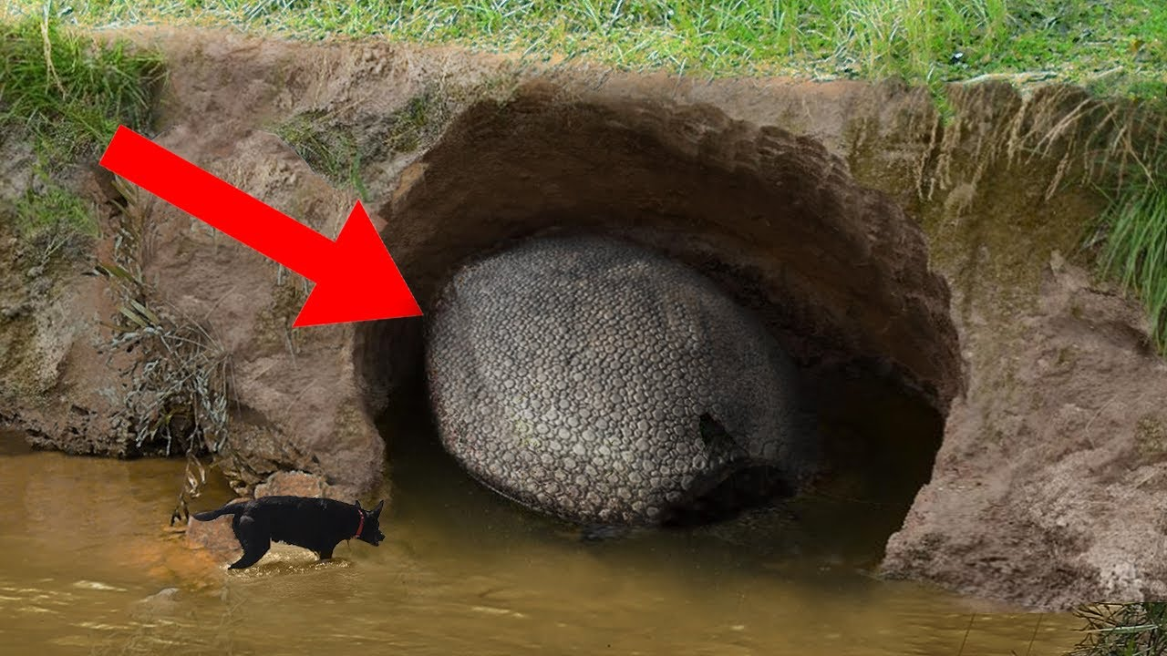 10 Bizarre Discoveries That Turned Out To Be Amazing!