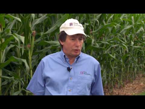 Ammonium Sulfate For High Yield Systems  Part Two