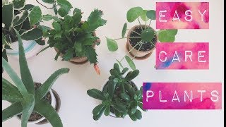 7 House Plants Perfect For Beginners
