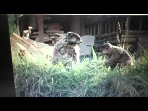 New Geico Commercial With Woodchucks