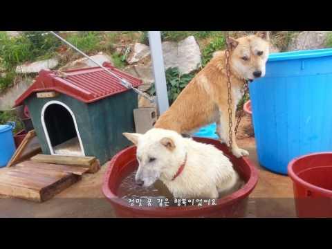 [35] 진돗개 부부의 개그 패러디 '로미오와 줄리엣' / Dog couple's gag parody,   'A time for us'