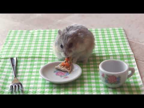 Tiny dwarf hamster eating a tiny pizza