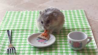 Repeat youtube video Tiny hamster eating a tiny pizza