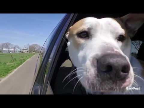 Freedom Rides - Cam