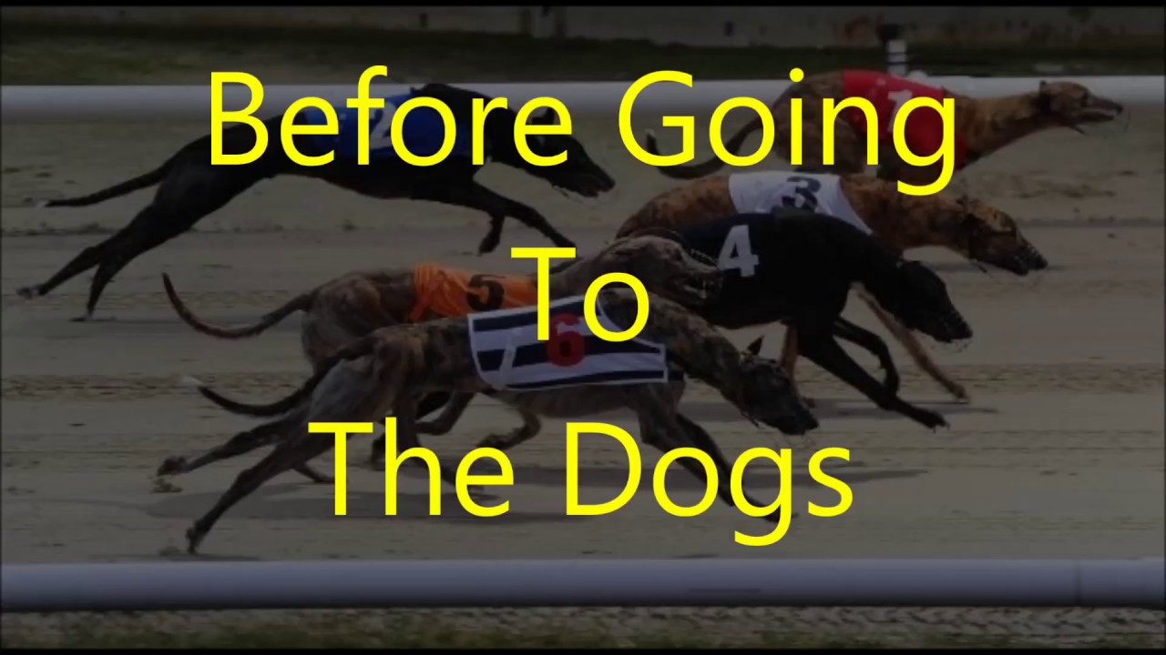 dog racing betting advice bulletin