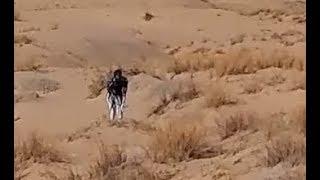 Video Killing Fields of Inhabited Alien Planet With Millions of Intelligent Reptilian Creatures. Part 4 download MP3, 3GP, MP4, WEBM, AVI, FLV Juni 2018