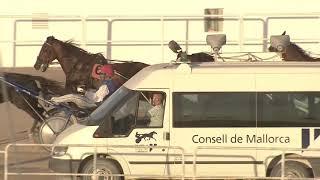 Vidéo de la course PMU PREMI CENTENARI REAL SOCIEDAD HIPICA DE MALLORCA