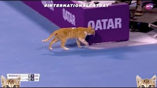 Cats on court! #InternationalCatDay