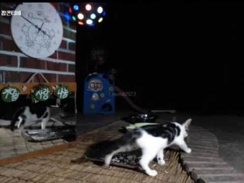 Cats Meok Bang : Stray Cats in South Korea [팝콘티비 BJ도둑고양이 나비월드] 160821 난닝이 오전3시50