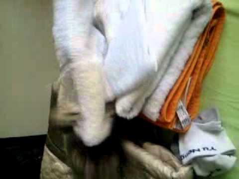 Singapura cat fighting for towel!
