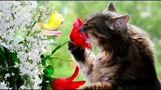 Весна оживает природа ,цветы,животные...Spring comes alive nature