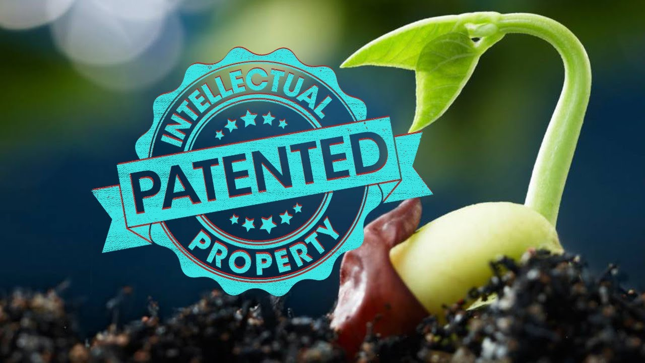 Open Seeds: Biopiracy and the Patenting of Life