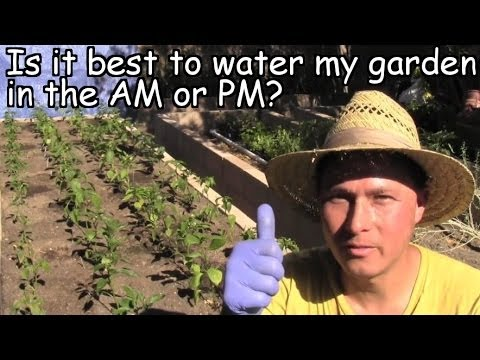 Is it best to water my vegetable garden in the AM or PM? and more Gardening Q&A