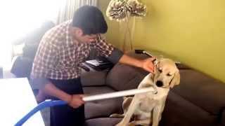 vacuum massage to my Dude. Massage to Dog.