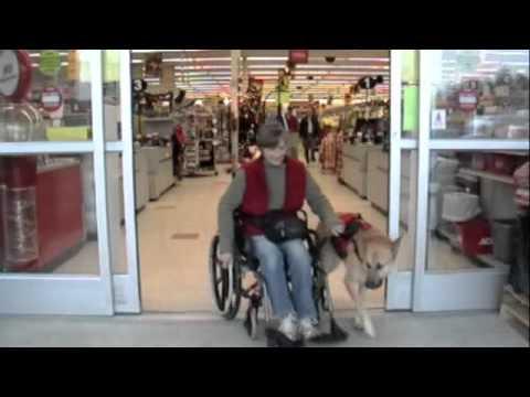 Dog pulls Wheelchair.m4v - YouTube