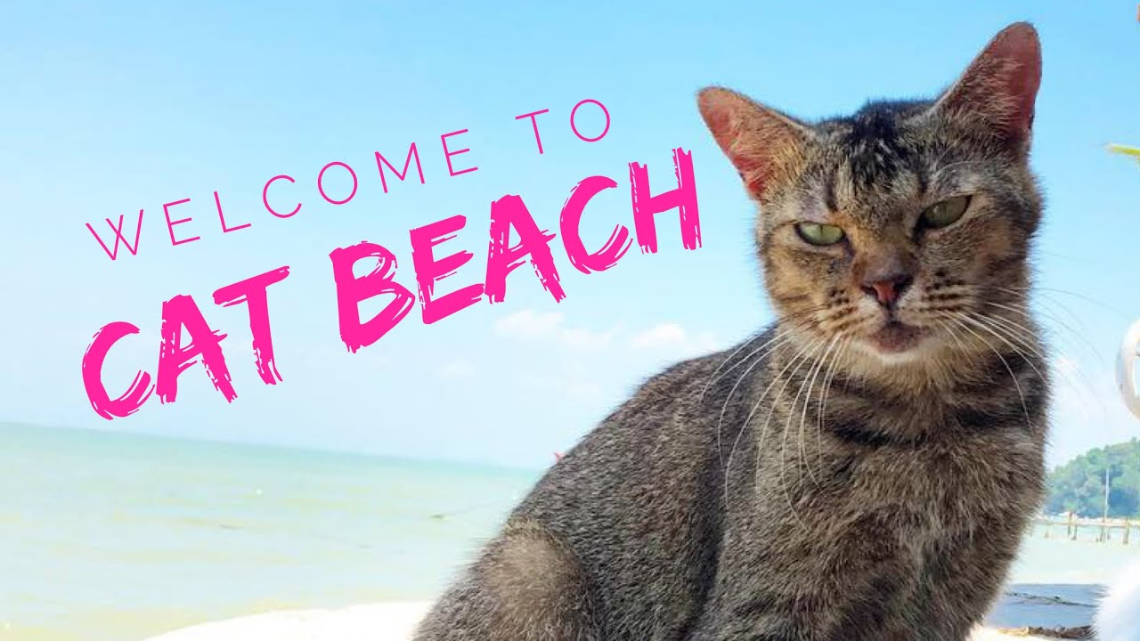Cat Beach In Malaysia You