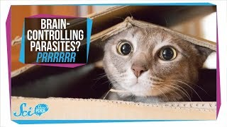 toxoplasmosis how parasites in your cat can infect your brain