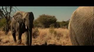 Прикол с слонами